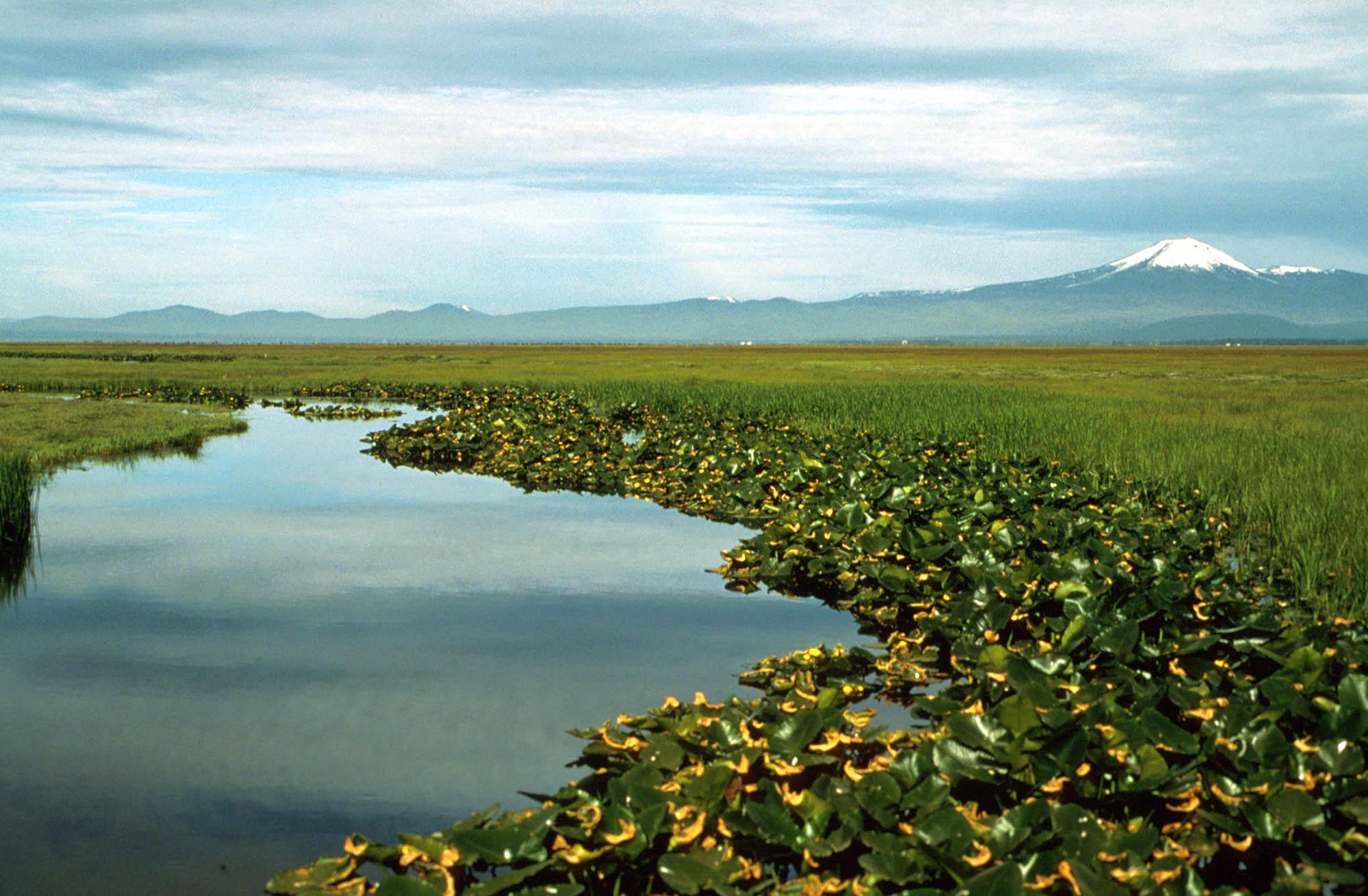 AquaSource водорасли, Суперхрана* от природата